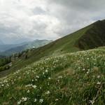 esc_20200607_Monte Golica.jpg